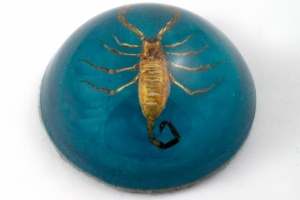 Blue Scorpion Paperweight